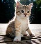 STOLEN KITTY