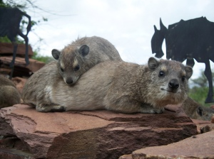 Hyrax photo by steveoehley/Creative Commons