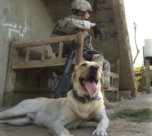 U.S. Army Spc. Kory Wiels and his military working canine Cooper  in Arab Jabour, southern Baghdad, Iraq.