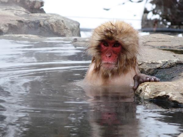Monkey photo by Gilad Raphaelli/Creative Commons
