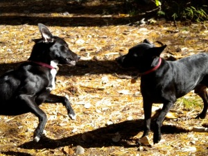 Little Greg and Peggy Sue playing.