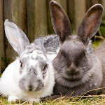 Bunnies: By fiskfisk