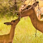 Deer: By Jacky W.
