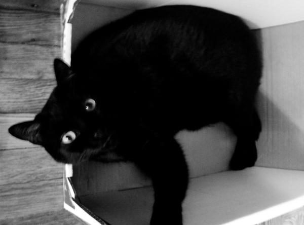 I f'n love cardboard boxes.