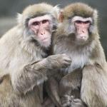 Monkeys: By Imnop8a