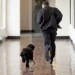 Barack Obama: Bo the Portuguese Water Dog