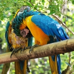 Parrots: By dark_side_of_the_fall