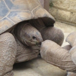 Turtles: By Wrakky