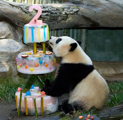 http://currentinstinct.files.wordpress.com/2011/09/panda-birthday-picture-5.jpg?w=425&h=417